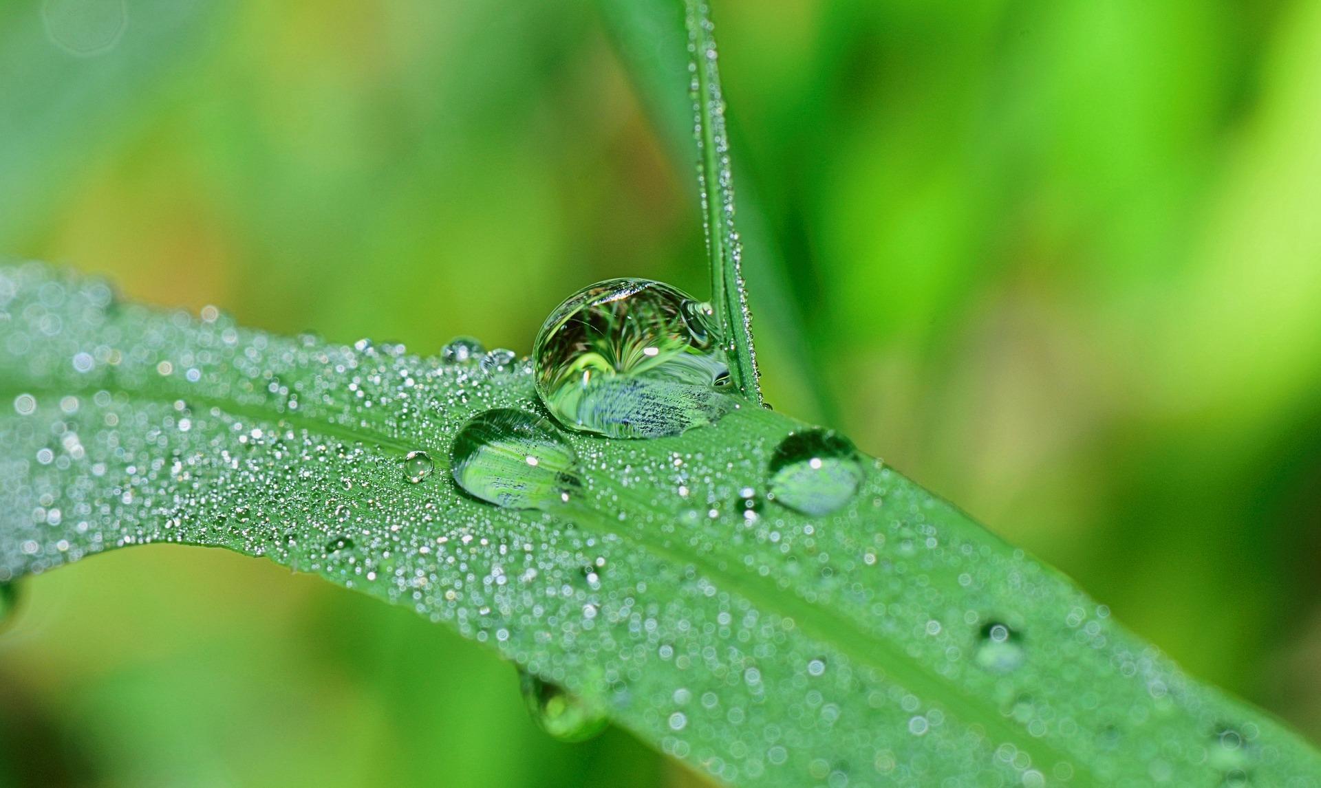 Feuchtigkeit liegt schon in der Natur - Hyaluronsäure bindet Wasser